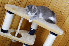 Кот играя в огромном cat-house Стоковые Фотографии RF