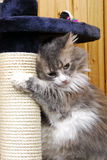 Кот играя в cat-house Стоковая Фотография