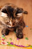 Кот играя головоломку на поле Стоковое Изображение