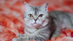 Кот играя на красной софе акции видеоматериалы
