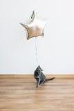 Кот играя при baloon держа ленту русский голубого кота Стоковые Изображения RF