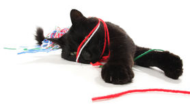 кот играя пряжу Стоковые Фото