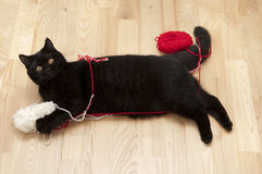 кот играя резьбы Стоковое Фото