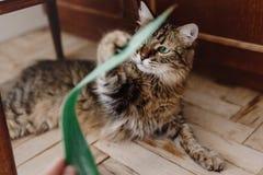 Кот играя с зеленым растением с смешными эмоциями и зелеными глазами Стоковое Изображение RF
