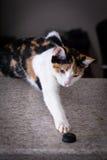 Кот играя с крышкой бутылки Стоковая Фотография RF