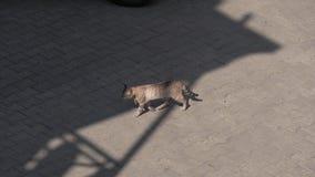 Кот идя на улицу, Georgia сток-видео