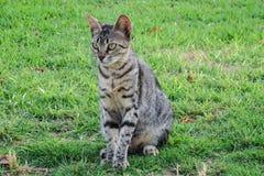 кот дикий Стоковые Изображения RF