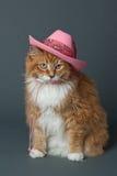 Кот имбиря в розовой ковбойской шляпе Стоковая Фотография