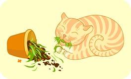 Кот имбиря который сломал цветочный горшок и ест траву Стоковое Изображение
