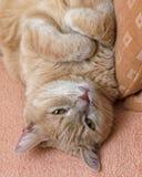 Кот имбиря лежит на своей задней части на софе стоковое фото