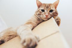 Кот имбиря на двери дома стоковая фотография rf