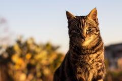 Кот имбиря на заходе солнца Стоковая Фотография
