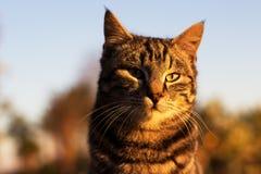Кот имбиря на заходе солнца Стоковое фото RF