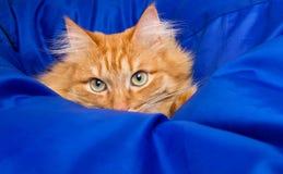 Кот имбиря пряча в голубом одеяле Стоковые Фото