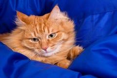 Кот имбиря пряча в голубом одеяле Стоковое Изображение