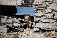 Кот имбиря сидя в камнях Стоковое Изображение RF