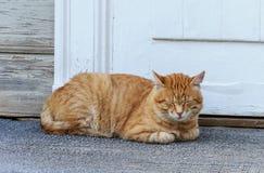 Кот имбиря спать около двери Стоковые Изображения