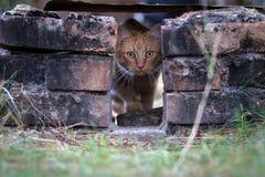 Кот имбиря среди кирпичей Стоковые Изображения RF