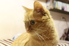 Кот имбиря с зелеными глазами лежа на кресле стоковые фото