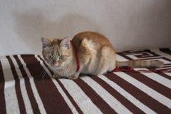 Кот имбиря с зелеными глазами лежа на кресле стоковое изображение rf