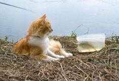 Кот имбиря с уловленными рыбами на времени рыбной ловли Стоковая Фотография RF