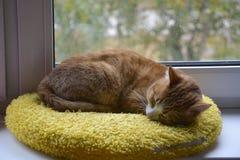 Кот имбиря уснувший на окне Стоковые Фотографии RF