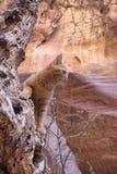 Кот имбиря Petra Джордана Стоковое Фото