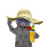 Кот имеет остатки в лете с стеклом коктеиля Стоковая Фотография