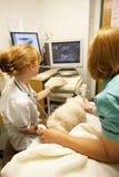Кот имея развертку ультразвука на ветеринарах Стоковая Фотография