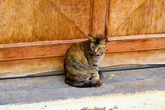 кот интересовал изолированную снятую взглядом сидя белизну студии стоковое фото rf