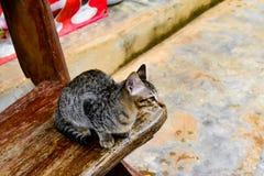 кот интересовал изолированную снятую взглядом сидя белизну студии стоковые фотографии rf