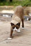 кот интересовал изолированную снятую взглядом сидя белизну студии Стоковое Изображение