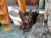 кот интересовал изолированную снятую взглядом сидя белизну студии Стоковые Фото