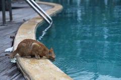 кот испытывающий жажду Стоковые Фотографии RF