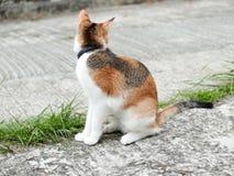 Кот ища добыча стоковая фотография