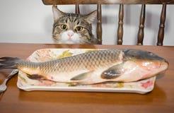 Кот и большая рыба Стоковое фото RF