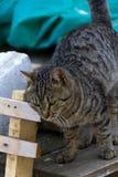 Кот и глаза кота Стоковые Изображения