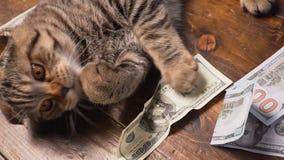 Кот и деньги в присутствующей корзине акции видеоматериалы