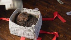 Кот и деньги в присутствующей корзине сток-видео