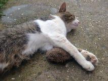 Кот и еж стоковые фото