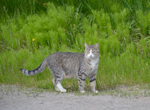 Кот идет на улицу Стоковое Изображение