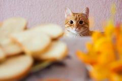 Кот и еда Стоковое фото RF