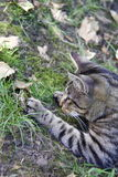 Кот и жаба Стоковая Фотография