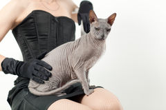 Кот и женщина Стоковые Изображения