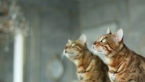 Кот и зеркало акции видеоматериалы