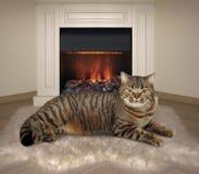 Кот и камин 1 стоковые фотографии rf
