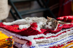 Кот и ковры Стоковые Фото