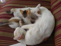 Кот и котята Стоковые Фотографии RF
