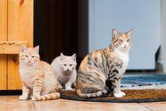 Кот и 2 котят Стоковая Фотография
