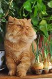 Кот и луки Стоковая Фотография RF